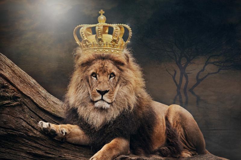 Ontwikkel je leiderschap, coaching, persoonlijk leiderschap